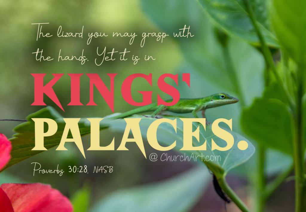 Proverbs 30 verse on an image with a lizard sitting on a leaf